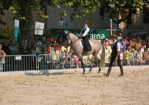 Petits chevaux ibériques