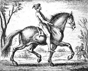 Travailler les chevaux « longs »