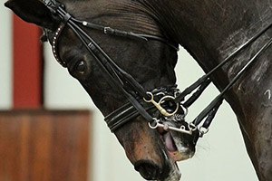 Pour quoi prend-on les chevaux ? juste des mécaniques
